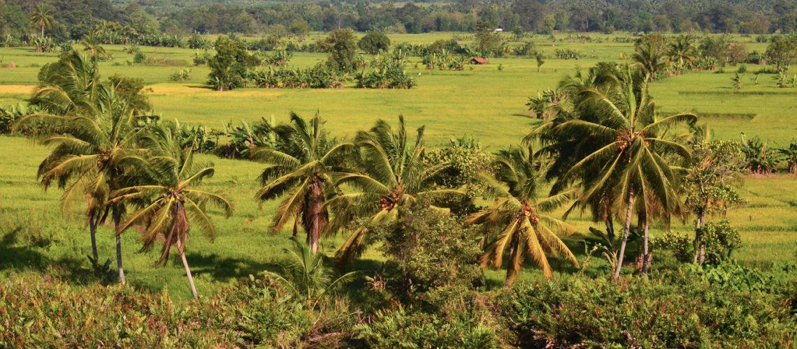 SRI LANKA – Paisajes